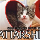 Keeping Up With The Kattarshians