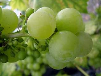 Grapes are often called nature's