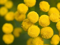 Rostliny kvetoucí na podzim
