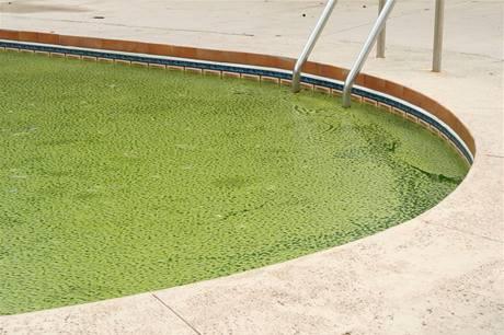 Zelená voda v bazénu