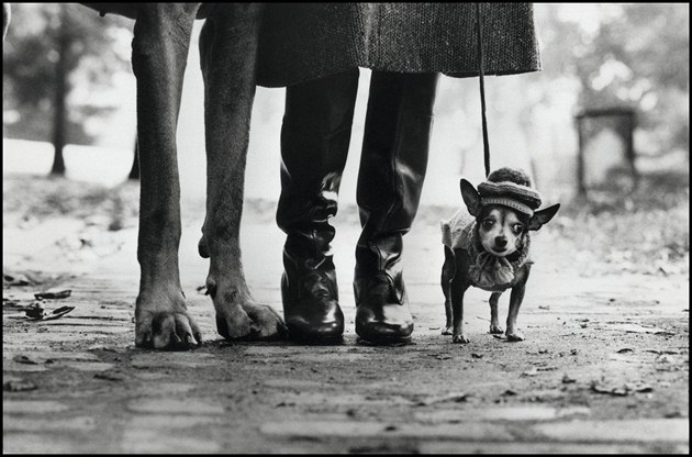 Elliott Erwitt - New York, 1974