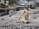 A dog frolics in the street in central Sochi