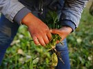 Students harvest vegetables from a field outside the Democracy Elementary and...
