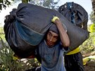 In this June 20, 2015 photo, Edgar Escalante shoulders a sack filled with coca...