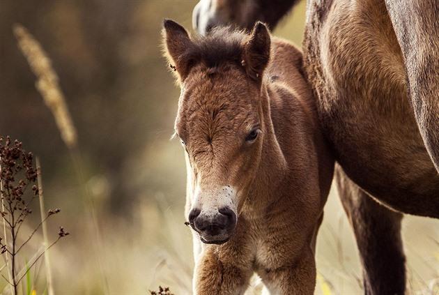 Výsledek obrázku pro koně