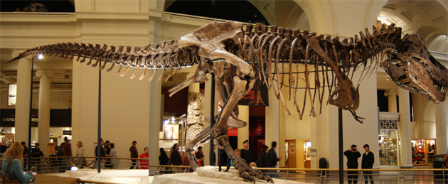 Bo�ní pohled na Sue ve Filed Museum of Natural History v Chicagu