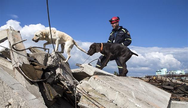 Čím více psů trosky prohledává, tím větší je šance na nalezení zavalených osob.