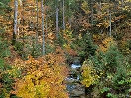 Jeden z potůčků, z nichž vzniká Studená Vltava (Kalte Moldau).