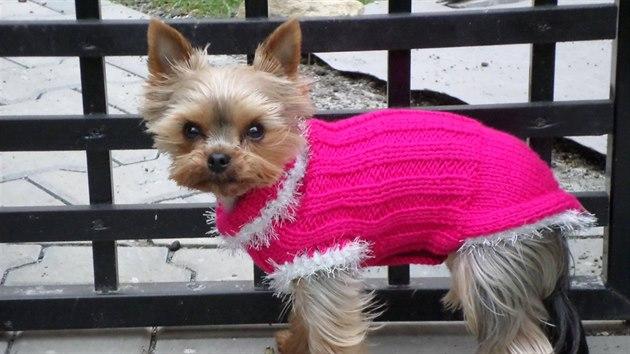 I psí záda ocení teplo. Při teplotách lehce nad nulou stačí i svetr.