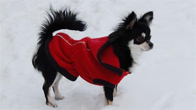 Když mrazy poleví, může pejskům i v zimě stačit na zahřátí mikina.