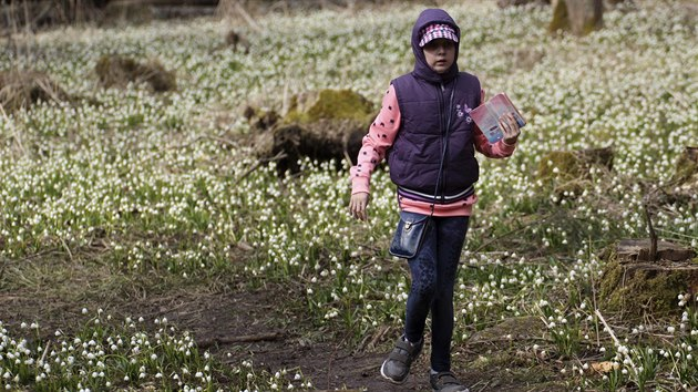 Bledule v národní přírodní rezervaci Ransko přitahují každé jaro pozornost tisíců lidí.