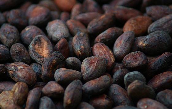 Čokoláda vyráběná přímo z čokoládovıch bobů má vıraznou chuť. Je to jako u kávy...