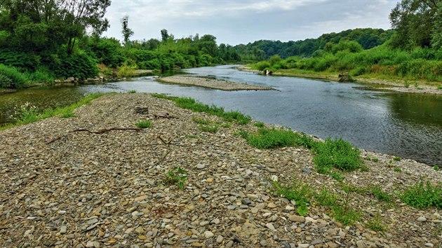 Řeka Bečva v lokalitě zvažované přehrady Skalička poskytuje domov řadě ohroženıch druhů hmyzu. A to mimo jiné díky nánosům štěrku a písku u břehu, takzvanım štěrkovım lavicím.