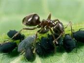 Mravenci například neustále myslí na to, aby měli dost zásob na období, kdy...
