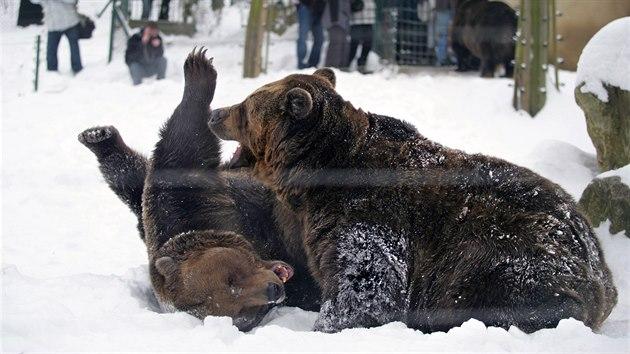 Medvědi na vás čekají celoročně v berounském medvědáriu.