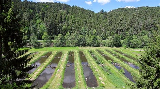 Bıvalé sádky poslouží jako záhony pro vodní rostliny v Bečovské botanické zahradě.