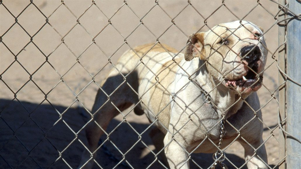 Sousedova psí smečka se nekontrolovatelně rozrůstá. Nedá se zde bydlet