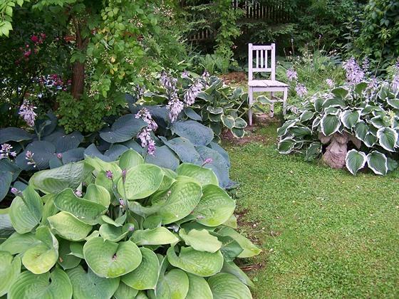 Ze stínu udělala paní Klára přednost a ve stinné části zahrady nechala zabydlet...