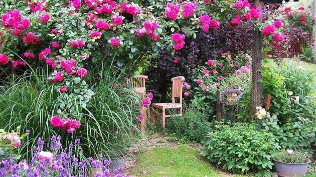Růže jsou chloubou i láskou paní Kláry, na zahradě jí kvete několk desítek různıch kultivarů.