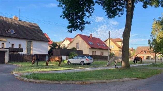 Veterinářka musela utratit zuboženého koně chovatelky Dity Kunové ze Žiliny na Kladensku. Majitelka se hájí, že zvíře bylo nemocné. (4. srpna 2020)