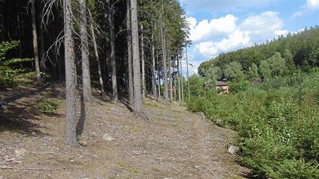 Dnešní podoba okraje lesa, v němž se točil film Kuky se vrací. Dole v nízké zeleni teče potok místy, kudy Kuky putoval. V době natáčení ho kryly podobné vysoké stromy, jež jsou v levé části snímku. Kůrovec a vichřice v posledních letech však vodní tok doslova obnažily.