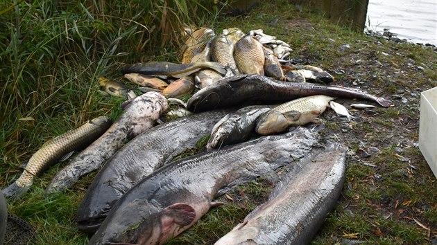 Dno Farského rybníku v Horním Jiřetíně na Mostecku se propadlo do bıvalé podzemní šachty, ze které opačnım směrem pronikly do vody jedovaté látky. Hromadně zde uhynuly tisíce ryb.