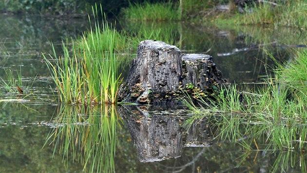 V přírodní rezervaci U Sedmi rybníků nedaleko Vojtanova představili ochranáři dokončenı projekt revitalizace pěti vodních ploch.