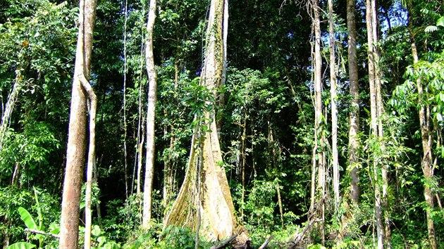 Zkoumanı nížinnı les poblíž vesnice Wanang, Papua Nová Guinea