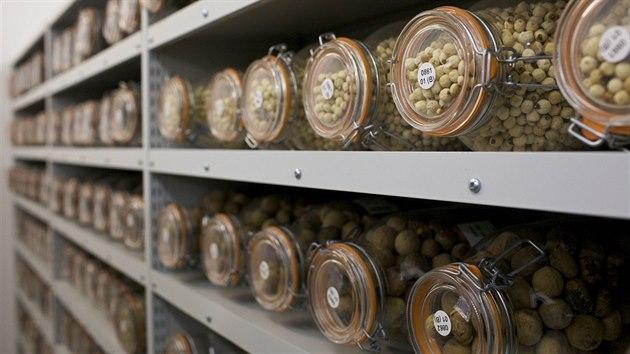 Trezory semenné banky Millennium Seed Bank