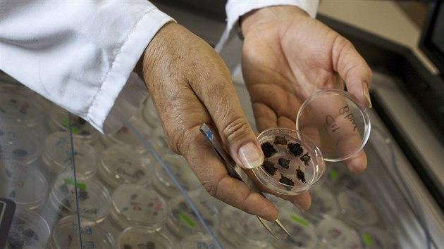 Kontrola vzorků v semenné bance Millennium Seed Bank