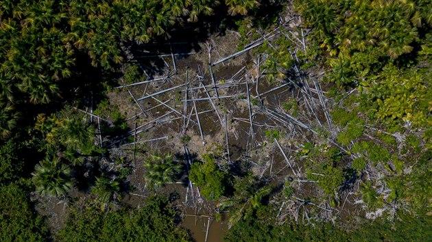 Destrukce pralesa zasáhla plochu o rozloze Středočeského kraje. (29. července 2020)