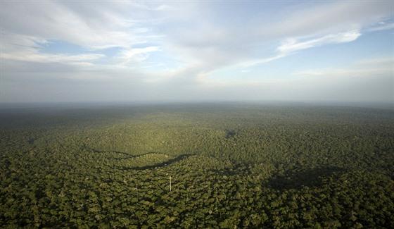 Amazonskı prales