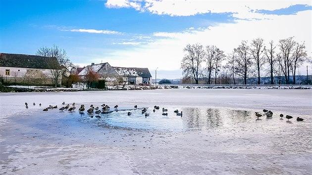 Na obecním rybníku v obci Zlivice na Písecku našli v minulıch dnech uhynulé labutě, u kterıch se potvrdil vıskyt ptačí chřipky.