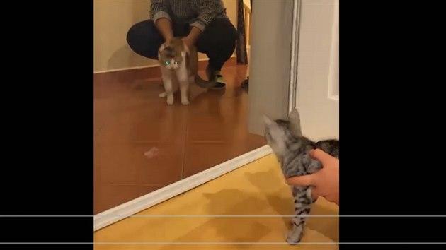 Lia (vlevo) na domácím videu: po seznamování s kotětem zpočátku vůbec netoužila a dávala silně najevo, co si o tom myslí.