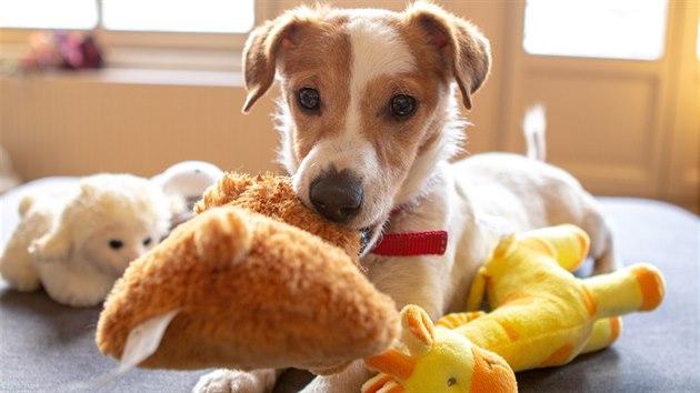 Nové hračky pomohou psa zabavit.