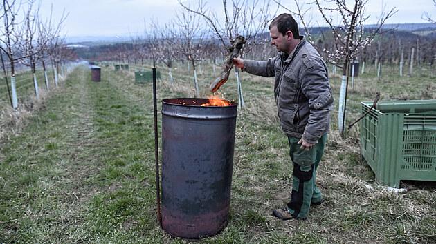 Oheň v sudech udržovali pracovníci sadů zhruba od půlnoci do osmi hodin ráno.