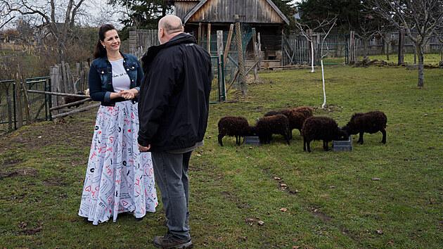 To nejsou malá jehňátka. To je stádečko černıch ouessantek, nejmenšího plemena ovcí na světě.