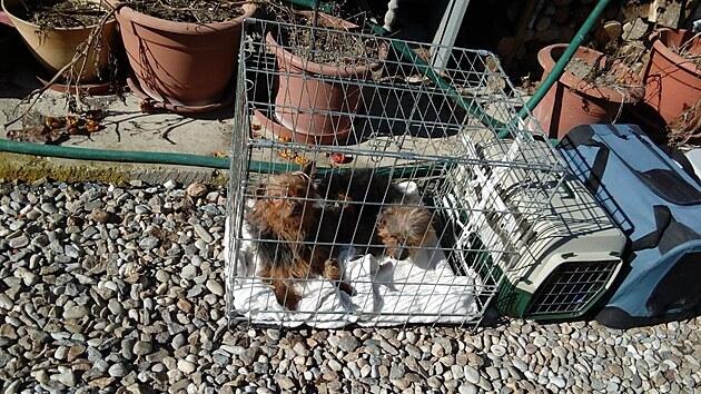 Psi sice byli dobře živení, ale žili v otřesnıch podmínkách. Tady už jsou připravení na odjezd.