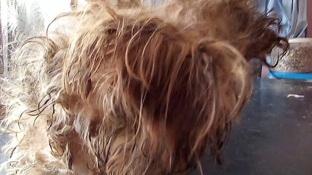 Psi sice byli dobře živení, ale žili v otřesnıch podmínkách. Nikdo je neudržoval.