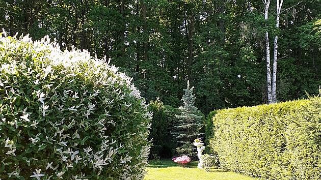 Ozdobnou vrbičku (na snímku vlevo) pěstí pán domu  do tvaru kulaté bonsaje, podle paní Jarmily ji zastřihuje snad obden.