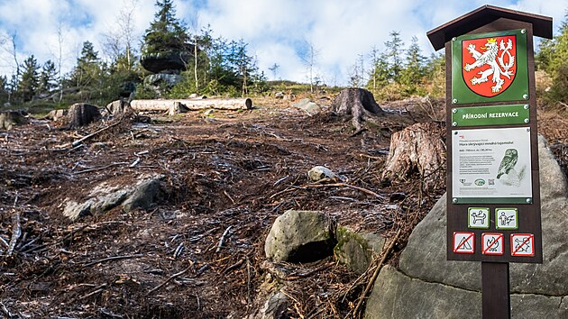 Kaceni lesa u stolové hory Ostaš na Náchodsku. Les v první zóně přírodní rezervace je napadenı kůrovcem. (2021)