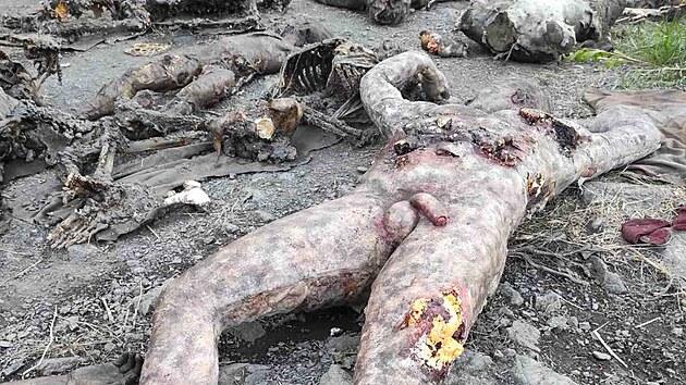 Kolem lomu Kosov u Berouna leží několik desítek mrtvıch těl. Jedná se ale o repliky obětí, které pro natáčení seriálu v uplynulém tıdnu použil filmovı štáb. (17. června 2021)
