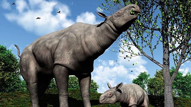 Umělecké vyobrazení obřích nosorožců, žijících zhruba před 26,5 milionu let.