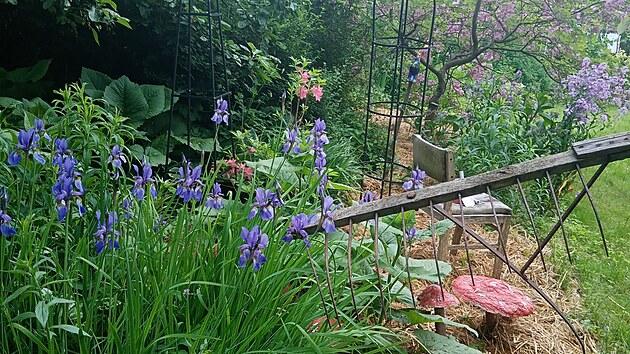 Ukázková přírodní zahrada u Žamberka, kterou zaslala do soutěže Nejkrásnější zahrada 2021 paní Irena Emma. Koncipuje ji jako zahradu ve stylu Alenky v říši divů.