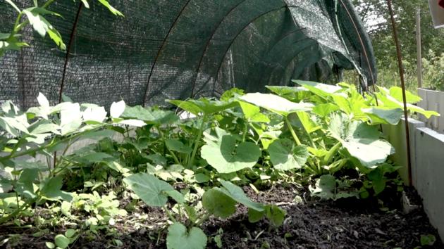 Hnojivo zkouší Rudolf Tyburec na vlastní zahradě.