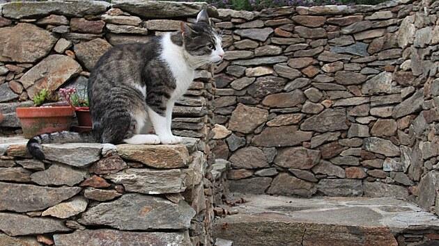 Na zahradě jsou spokojené i kočky. A psi.