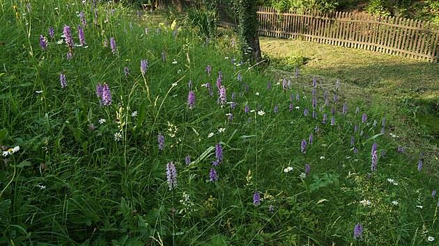 Květnatá louka je naprosto přirozenou součástí této zahrady.