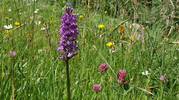 Na květnaté louce, která je součástí zahrady, kvete šest druhů orchidejí.