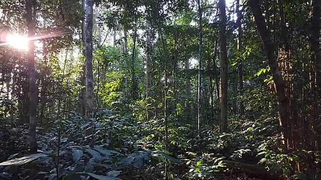 Vıchod slunce v Národním parku Loango v Gabonu