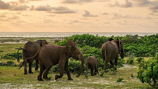 Národní park Loango v Gabonu je domovem slonů pralesních.